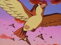Ash Pidgeot released.png