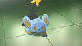 Aspertia Gym Shinx.png