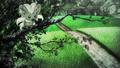 Cinccino anime.png