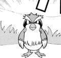Chase Pidgey ASC.png