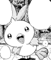 May Torchic AP.png