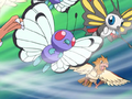 Spearow Gust.png