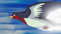 Ash Swellow Quick Attack.png