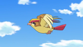 Pidgeot anime.png