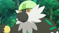 Tiny Passimian.png