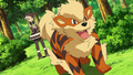 Marley Arcanine.png