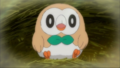 Ash Rowlet young.png