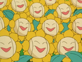 Multiple Sunflora anime.png